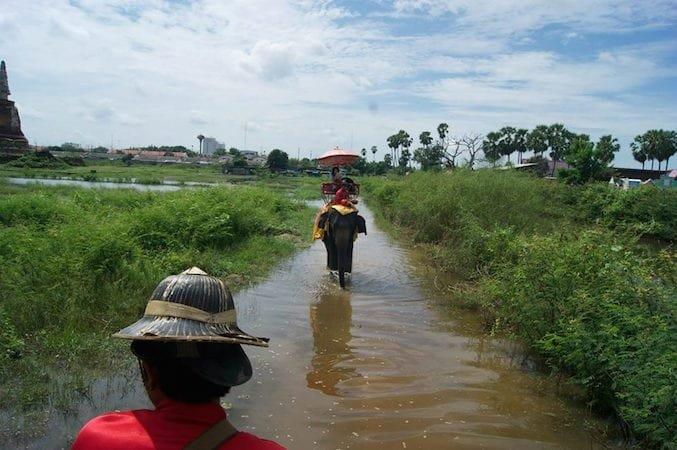 Giro in elefante, vicino a Bangkok